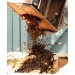 Honey Bees - Packages 3lb